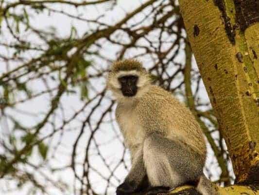Trip Planning for Climbing Mount Kilimanjaro