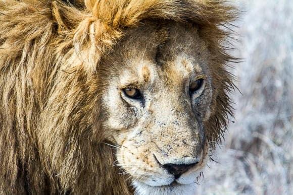 Tanzania Lodge Safaris